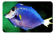 Mineral deficiency in marine fish