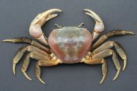 خرچنگ تایلندی (Thai Crab)